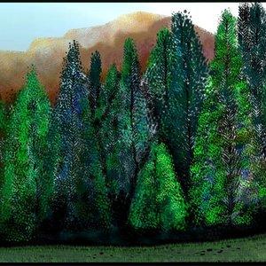 bosque_de_pinosconmontaYAas_372441.jpg