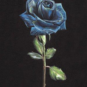rosa_azul_372837.jpg