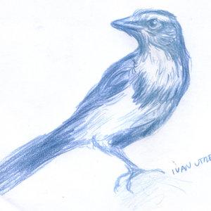 bird16_346402.jpg