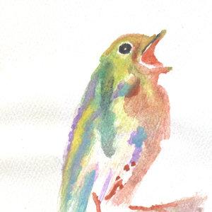 bird17_346540.jpg