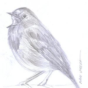 bird18_346564.jpg