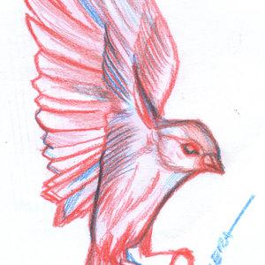 bird20_346690.jpg