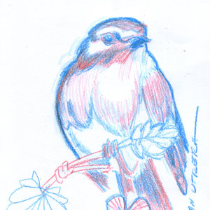 bird21_346700.jpg