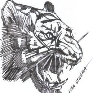 tiger03_346688.jpg