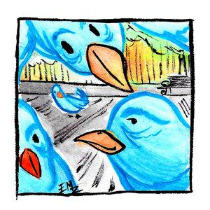 Birds_376712.jpeg