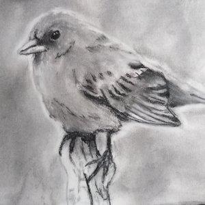Retrato de un ave a base de tisa y pastel