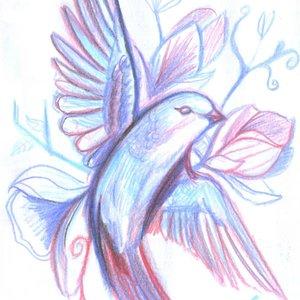 bird22_346799.jpg