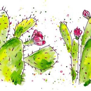cactus_377270.jpg