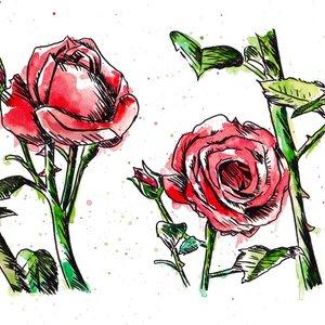 rosas_rojas_377437.jpg
