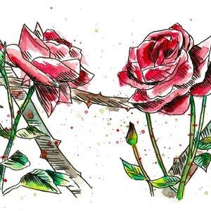 rosas_rosas_377438.jpg
