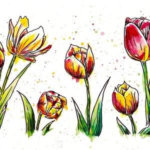 tulipanes_377439.jpg