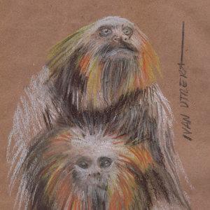 monkey01_379318.jpg