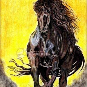 black_horse_379408.jpg