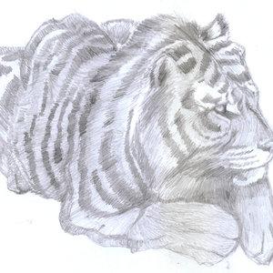 tiger01_347265.jpg