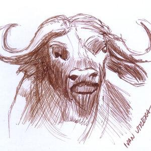 buffalo_347637.jpg
