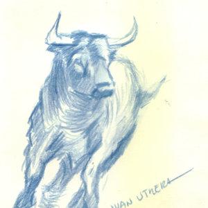 bull01_347886.jpg