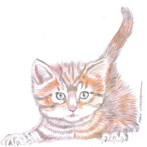 cat_348353.jpg