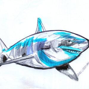 shark02_348354.jpg