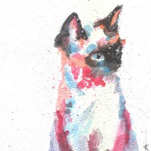 cat01_348728.jpg