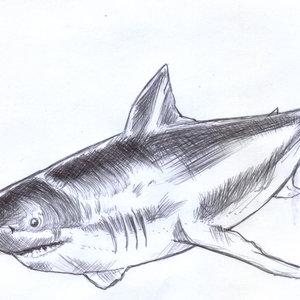 shark01_348729.jpg