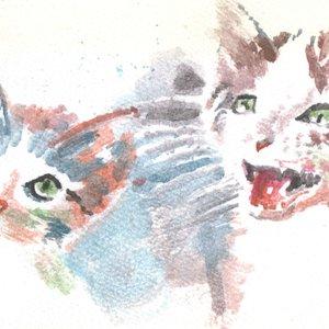 cat02_349072.jpg