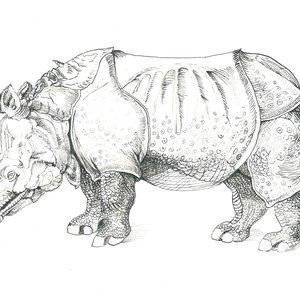 Rinoceronte_de_Durero_349308.jpg