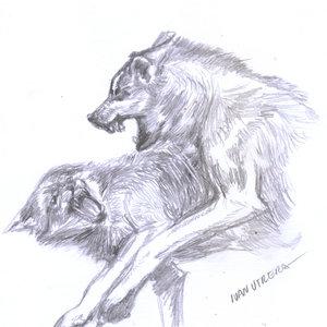 wolfs_343605.jpg