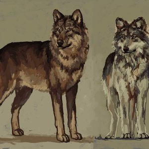 Werewolves_full_form_Male_and_Female_343639.jpg