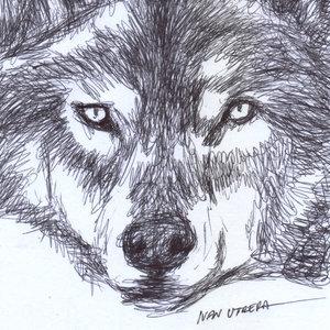 wolf_343802.jpg
