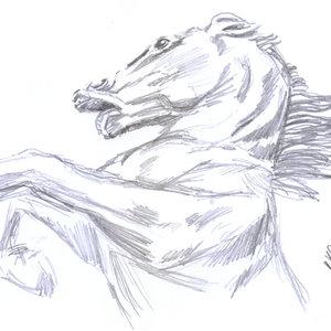 horse06_393033.jpg