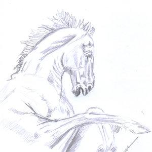horse05_393481.jpg