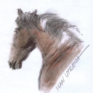 horse03_393699.jpg