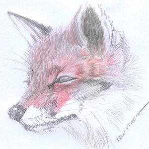 fox01_394147.jpg