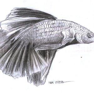 fish12_395563.jpg