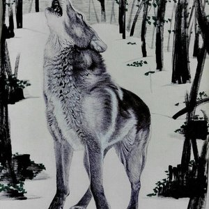 wolfss_395953.jpg