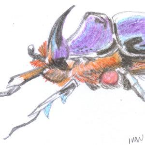 bug_398215.jpg