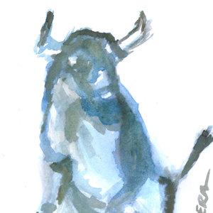 bull_398249.jpg