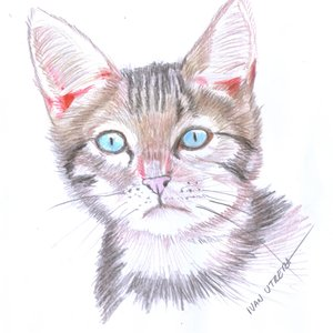 cat_398469.jpg