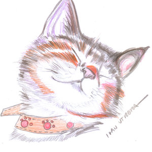 cat02_399809.jpg