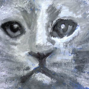 cat03_399983.jpg