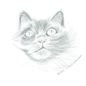 cat07_400731.jpg