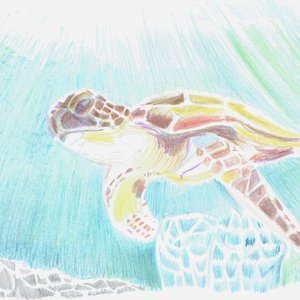 turtle03_400733.jpg
