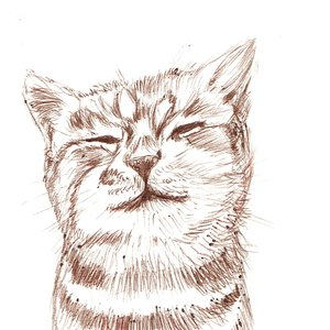 cat08_400901.jpg