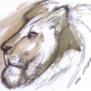 lion09_383082.jpg