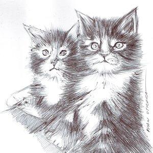 cat11_403803.jpg