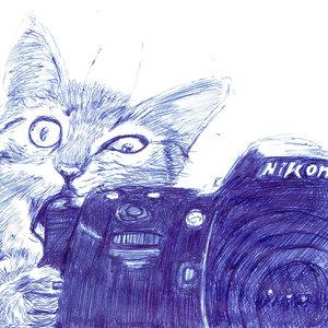 cat12_403808.jpg