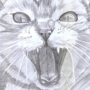 cat14_404862.jpg