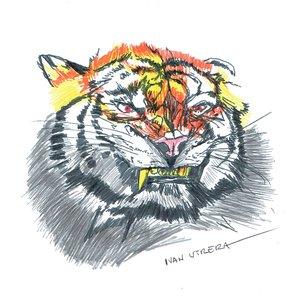 tiger16_404866.jpg