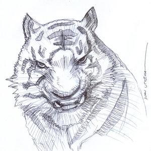 tiger17_404863.jpg