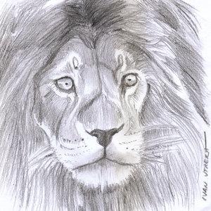 lion06_383237.jpg